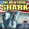 הכריש תוקף בניו יורק